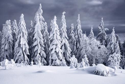 Winterwald Winterlandschaft Bayern