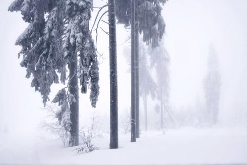 Wald Schnee Jahreszeiten