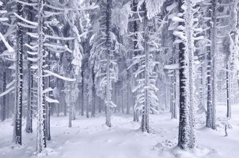 Märchenwald verzaubert schnee winter