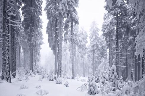bäume wald januar februar dezember