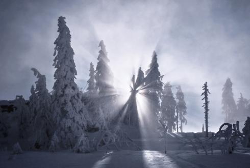 Lichtstrahlen sonnenstrahlen wald winter