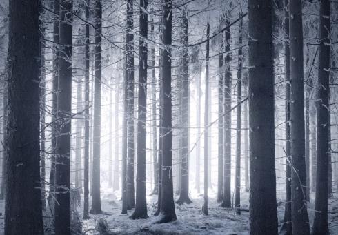 wald eis schnee bayern