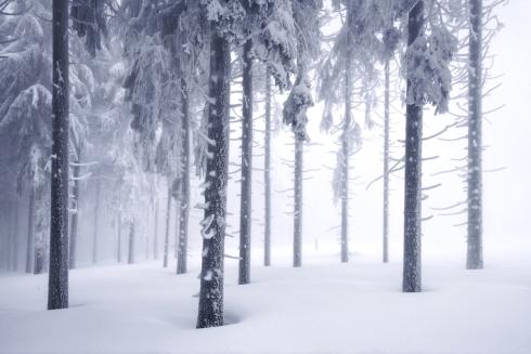 Bayerischer Wald Bayerwald Böhmerwald