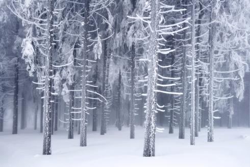 Winterwald Raureif Reif Eis Gefroren