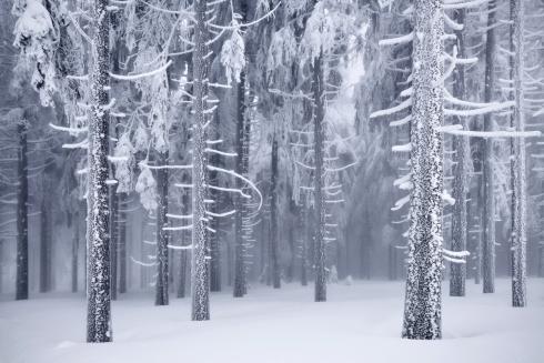Raureif Wald Bäume