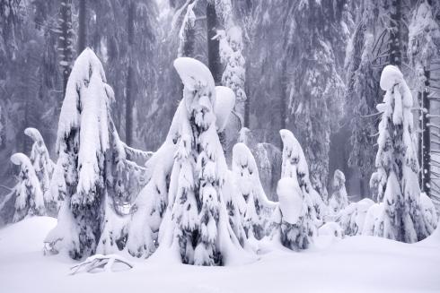 Schneegeister Waldgeister Winterwald wald